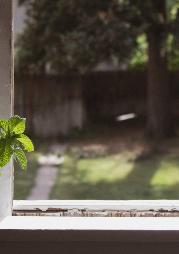 9 Herbs You Can Easily Grow on Your Windowsill